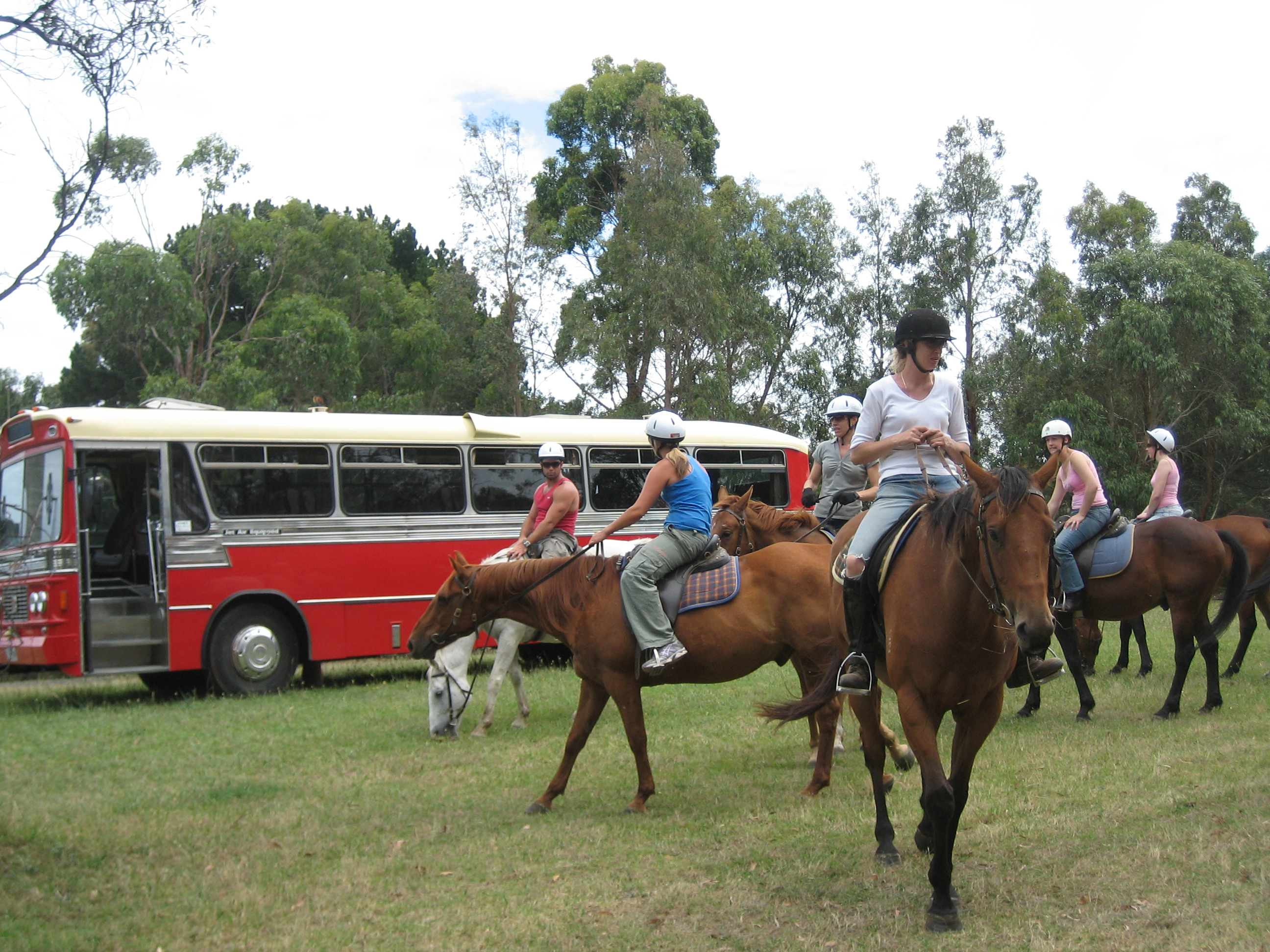 Red Hill Horses 1
